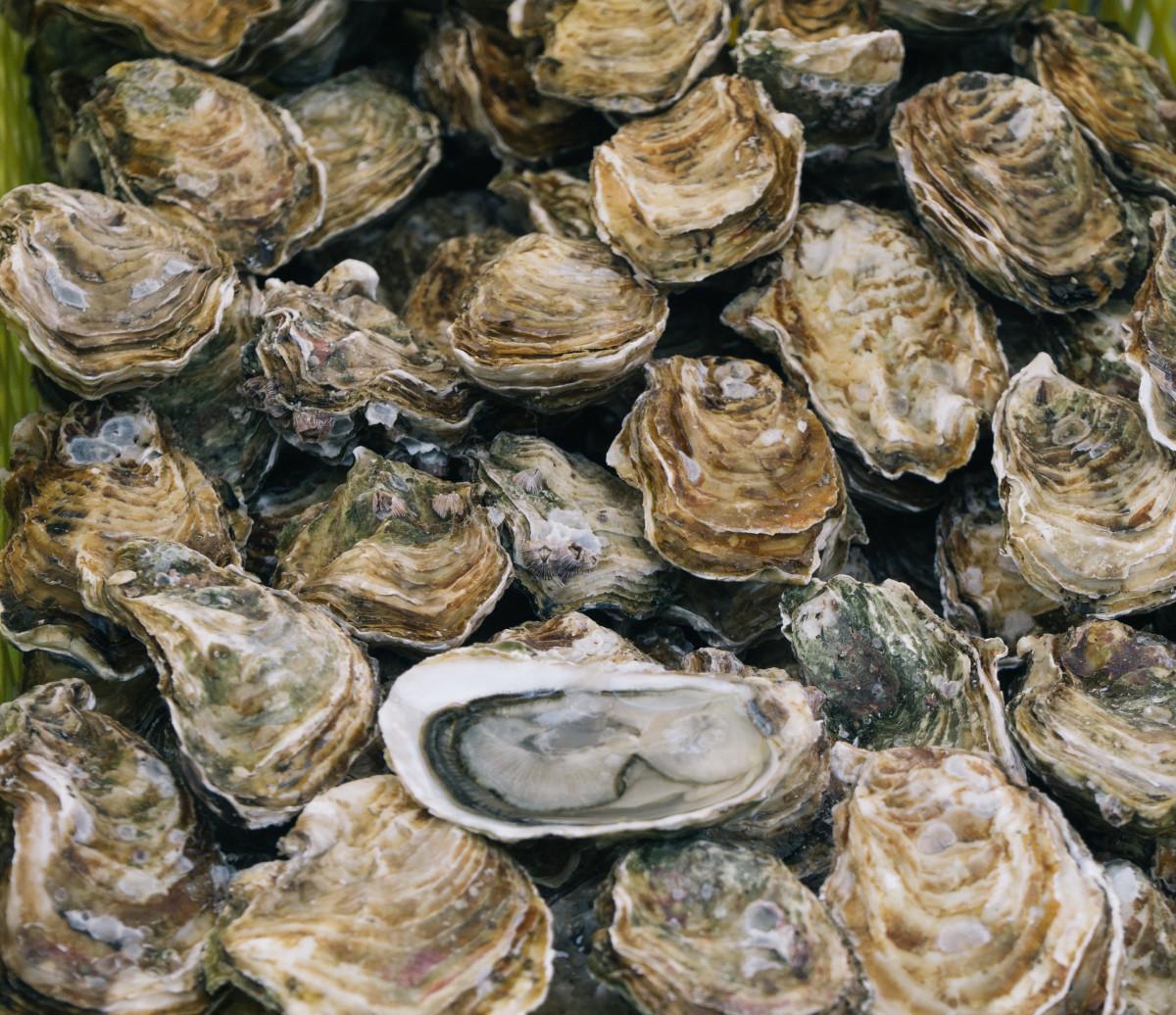 waar oesters eten in frankrijk